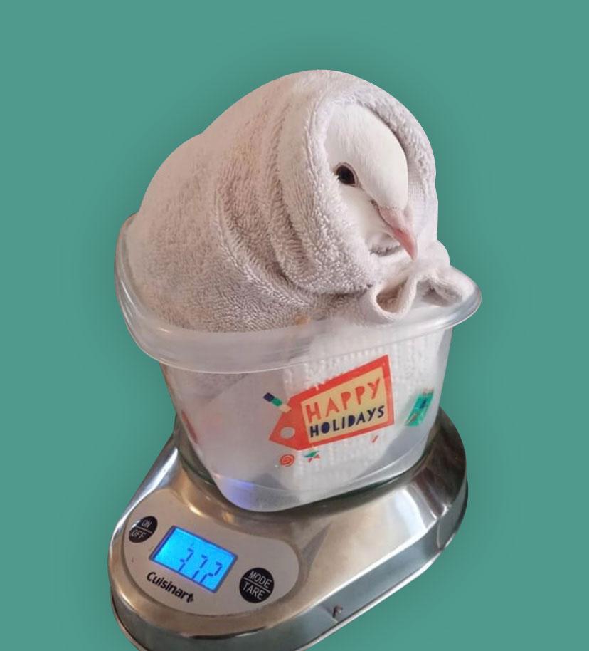 weigh-your-bird